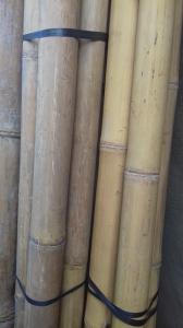 Grande cannes bambou 250 cm